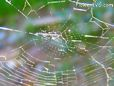 spiderweb picture
